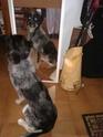 Balade avec chiens à Saint germain (Yvelines) - Page 2 02210