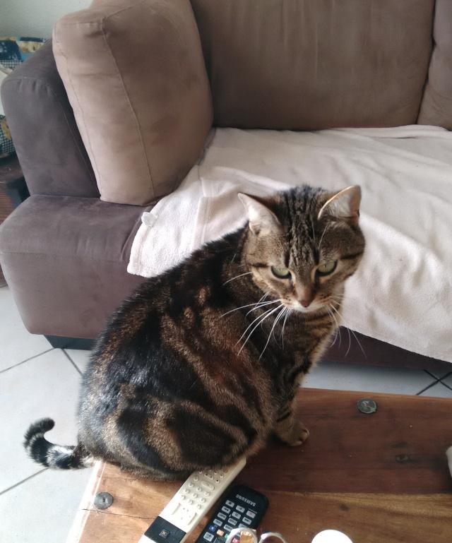 MAÏA - Tabby née en 04/2012 3010