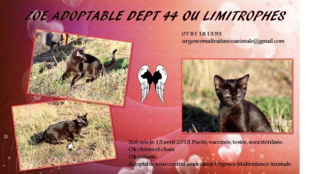 ZOE - femelle europ.noire - 05/2015 - UMA Zoe10