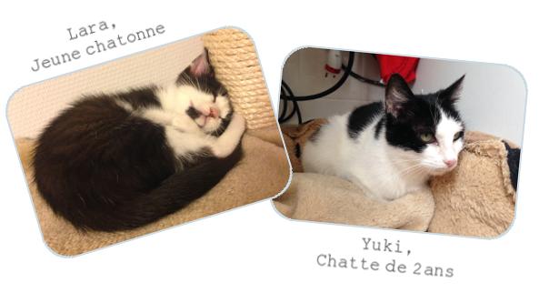 [Adopté] Love It, chaton Signat10