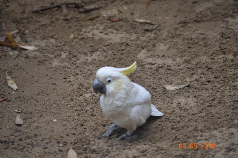 Zoo de la Palmyre 0_10910