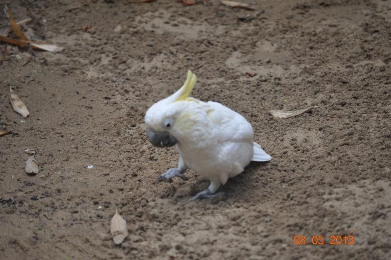 Zoo de la Palmyre 0_11010