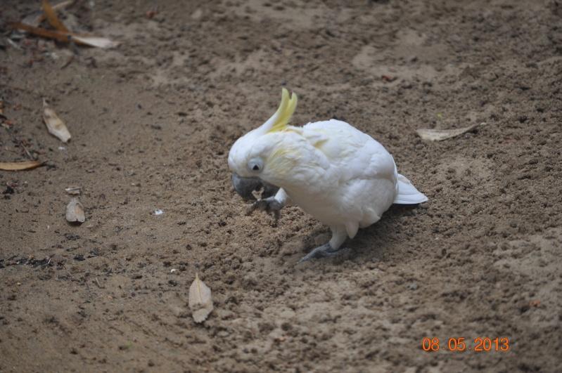Zoo de la Palmyre 0_11110