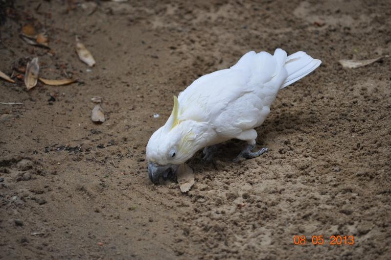 Zoo de la Palmyre 0_11210