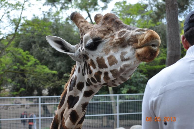Zoo de la Palmyre 0_15110
