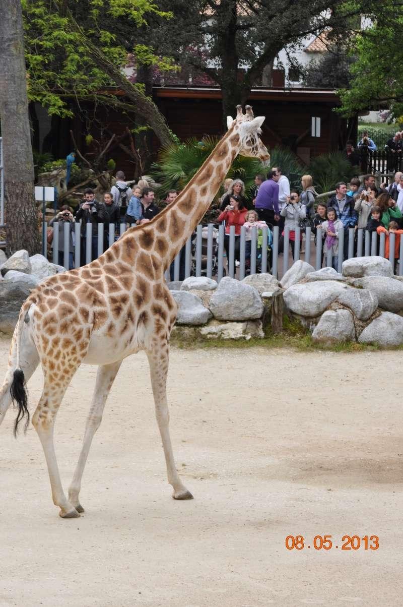 Zoo de la Palmyre 0_16010