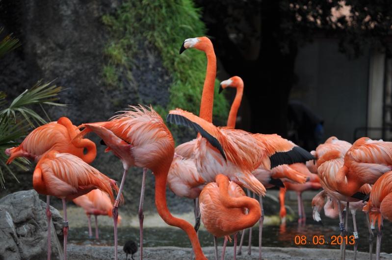 Zoo de la Palmyre 0_1810