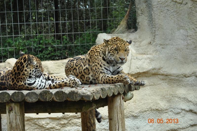 Zoo de la Palmyre 0_21610