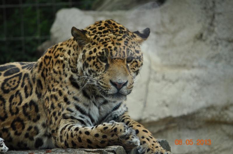 Zoo de la Palmyre 0_22110