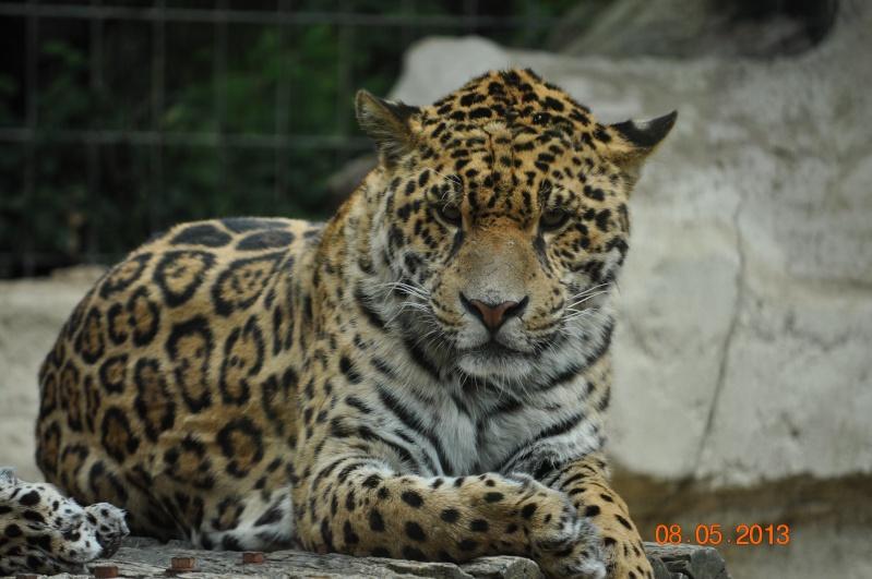 Zoo de la Palmyre 0_22510