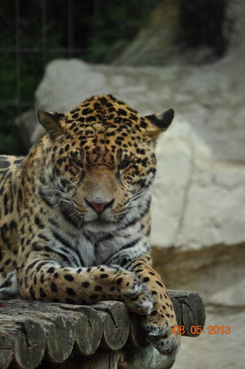 Zoo de la Palmyre 0_23210
