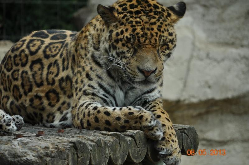 Zoo de la Palmyre 0_23410