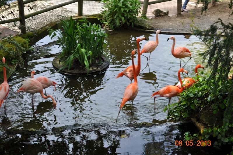 Zoo de la Palmyre 0_28110