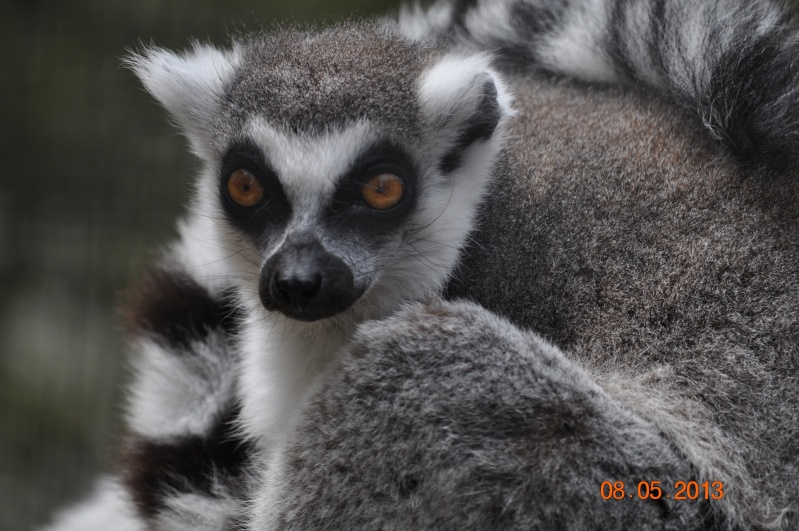 Zoo de la Palmyre 0_33010