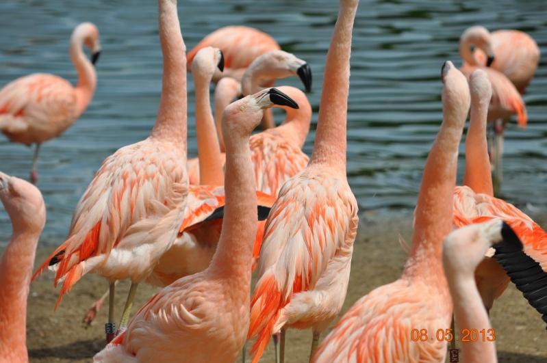 Zoo de la Palmyre 0_35410