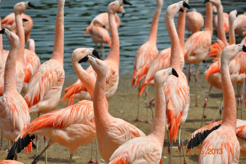 Zoo de la Palmyre 0_35510