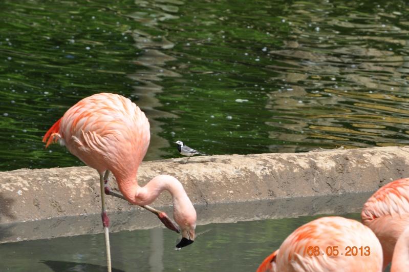 Zoo de la Palmyre 0_36410