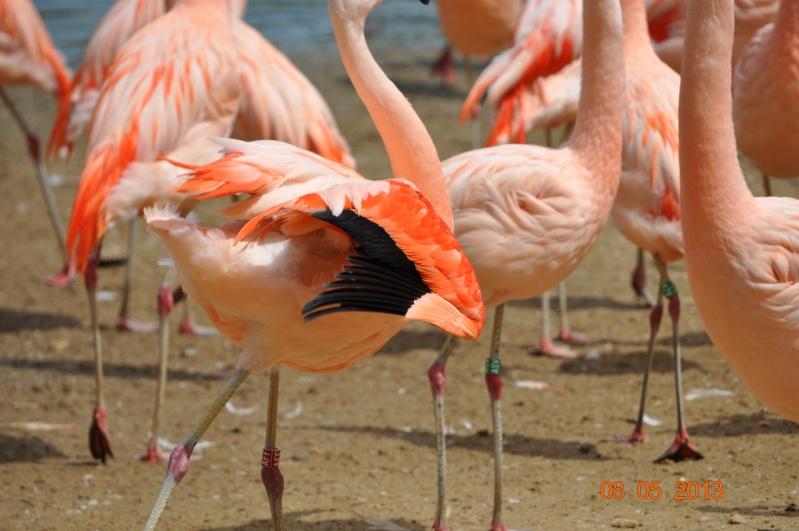 Zoo de la Palmyre 0_37810