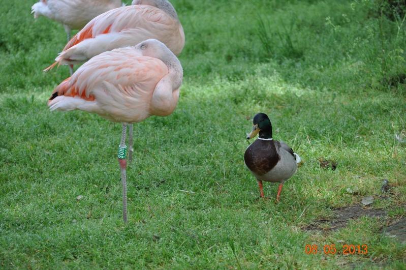 Zoo de la Palmyre 0_41010