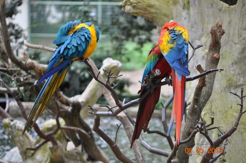 Zoo de la Palmyre 0_4110