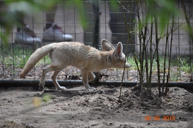 Zoo de la Palmyre 0_43110