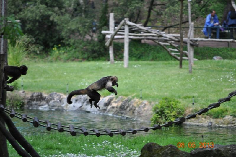 Zoo de la Palmyre 0_44710