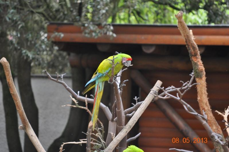 Zoo de la Palmyre 0_5810