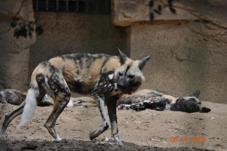 Zoo de la Palmyre 0_62210