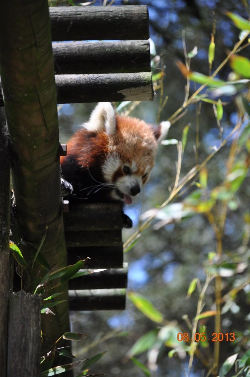 Zoo de la Palmyre 0_63810