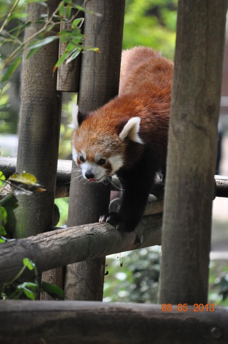 Zoo de la Palmyre 0_64910