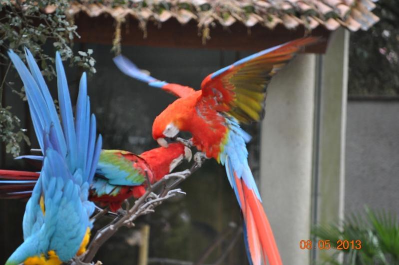 Zoo de la Palmyre 0_6610
