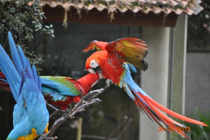 Zoo de la Palmyre 0_6710