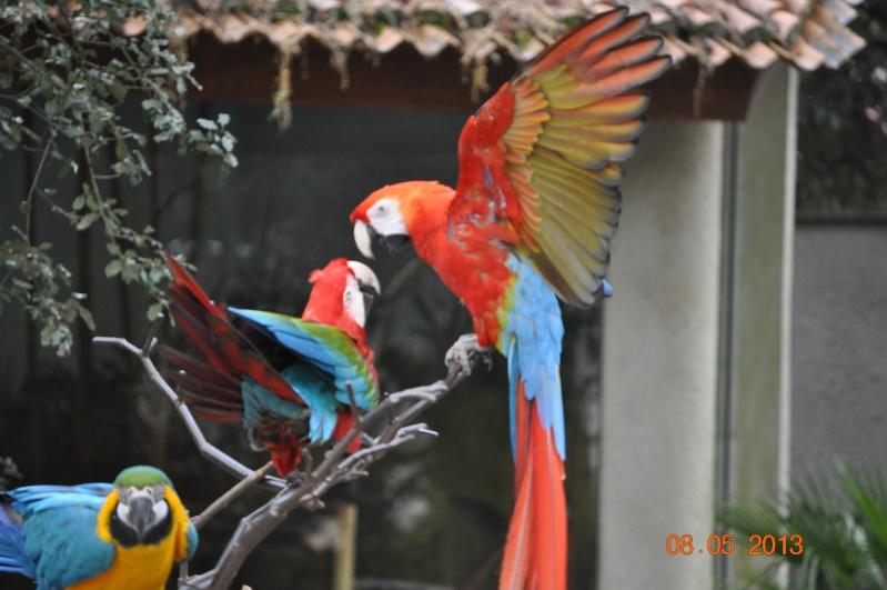 Zoo de la Palmyre 0_7010