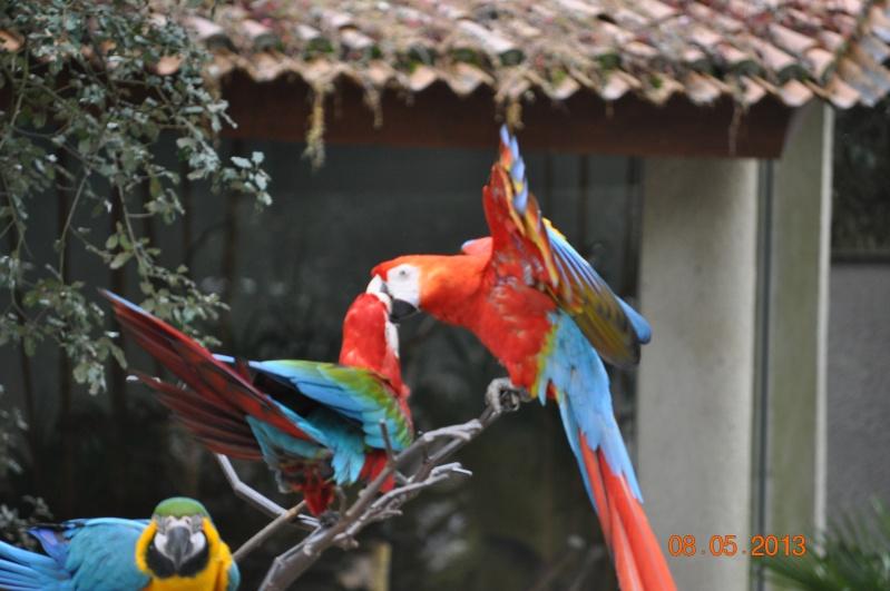 Zoo de la Palmyre 0_7110