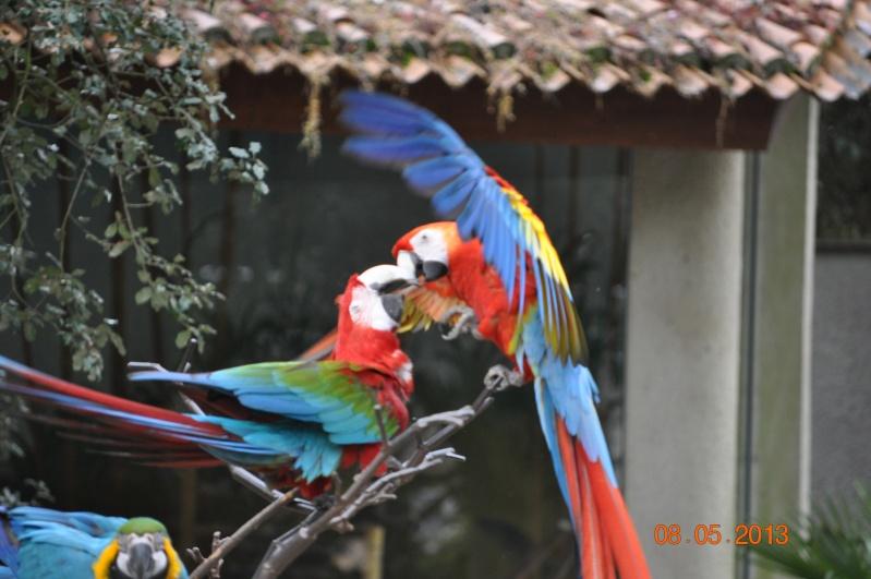 Zoo de la Palmyre 0_7210