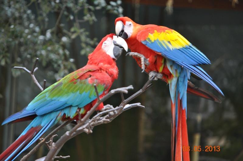 Zoo de la Palmyre 0_7910