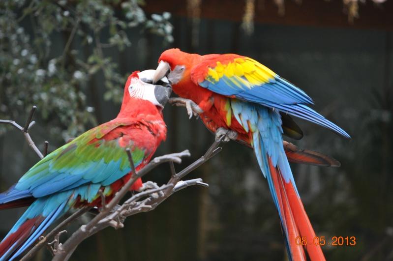 Zoo de la Palmyre 0_8010