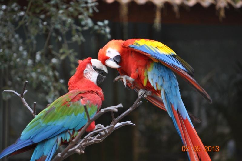 Zoo de la Palmyre 0_8510
