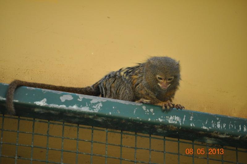 Zoo de la Palmyre 1_17810