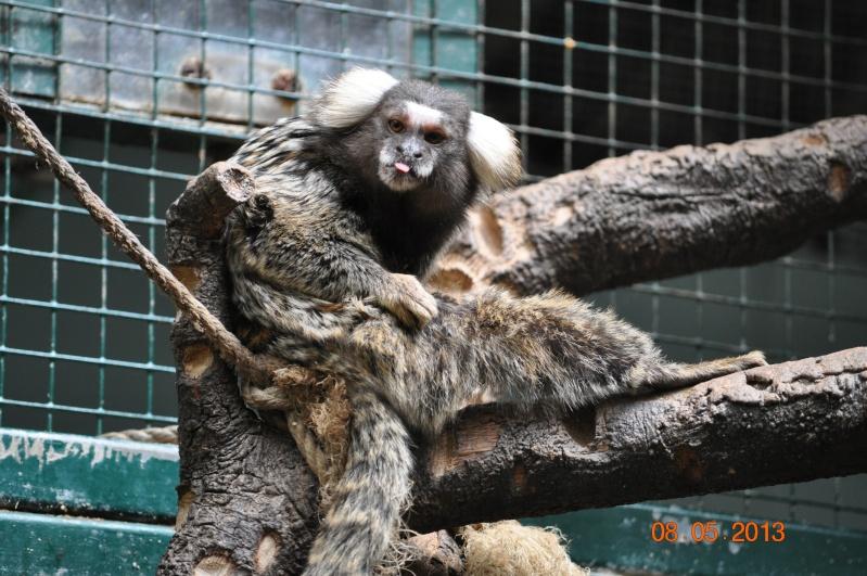 Zoo de la Palmyre 1_19510