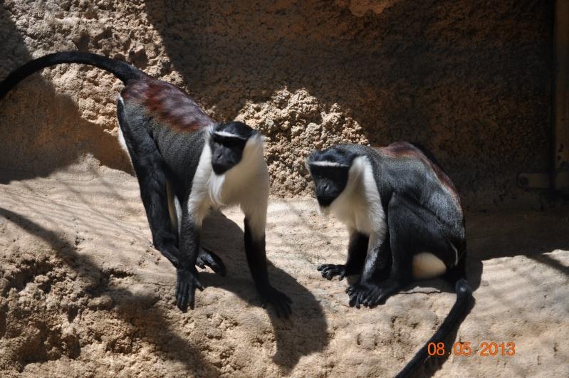 Zoo de la Palmyre 1_21810