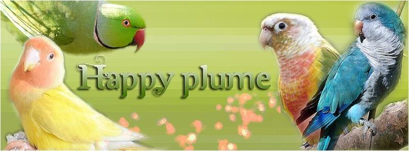 Happy'Plume Banniy10