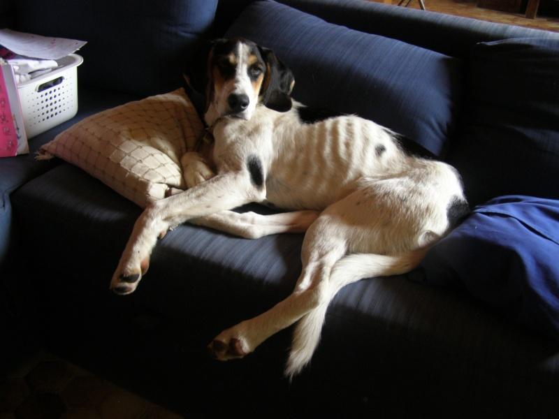 PLUME, jeune chienne 4 ans  x courant/ - asso Liberté sans frontière à Moissieu (38) P7290111