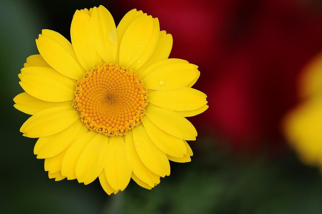 Fleur  8s8a5010