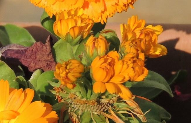 Fleur qui produit .... des fleurs 015-212