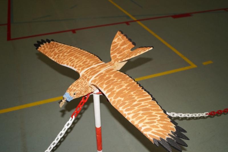L'oiseau de proie Dsc08210