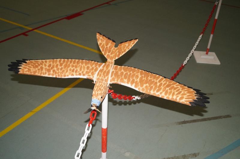 L'oiseau de proie Dsc08211
