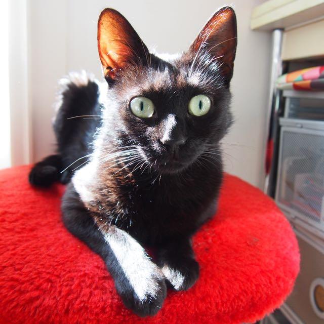 Jenga, femelle type européenne noire estimée née 15/10/2014 P6232116