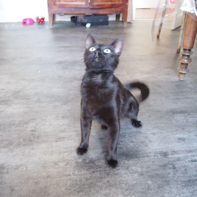 Jenga, femelle type européenne noire estimée née 15/10/2014 - Page 2 P7012213
