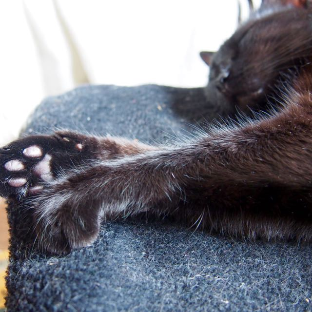 Jenga, femelle type européenne noire estimée née 15/10/2014 - Page 2 P7012314